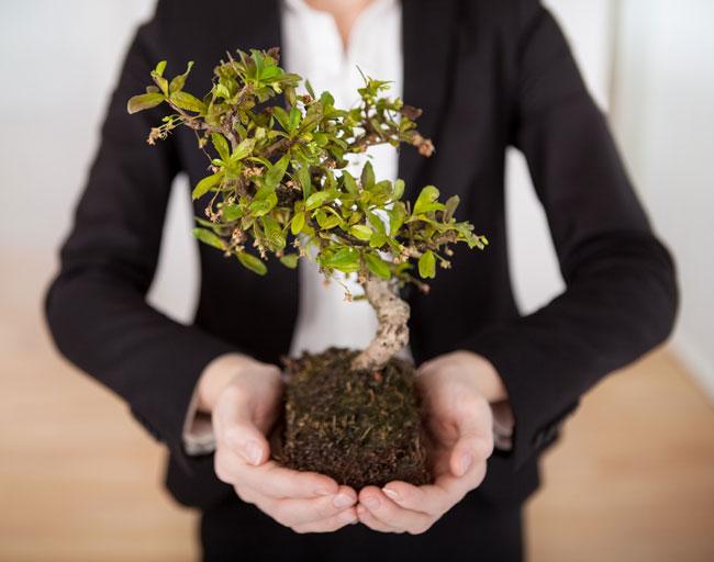 Manos sujetan un bonsai