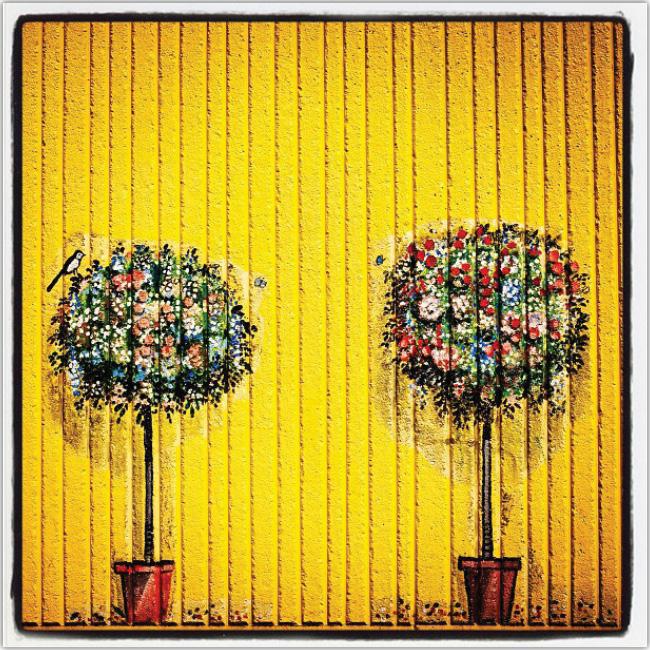Dos arbustos con un tronco alto y una pared amarilla detrás de ellos.