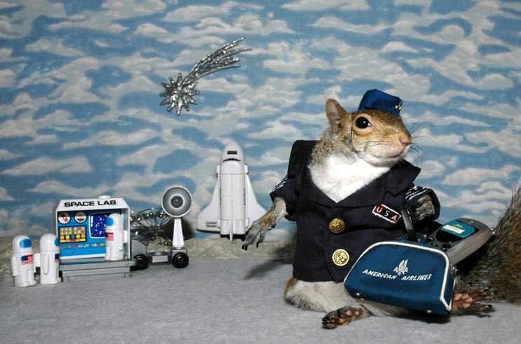 Ardilla piloto