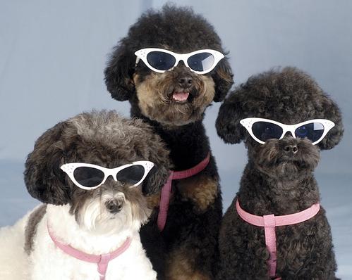 Perritos con anteojos