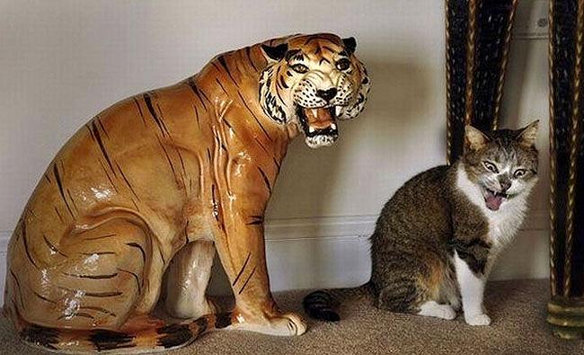 Gato gruñe a una estatua de tigre