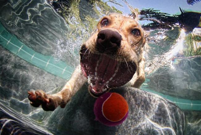 Perro bajo el agua con la boca abierta