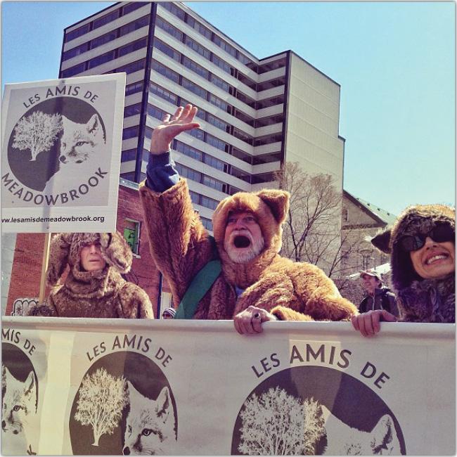 Hombre disfrazado de Oso del bosque protestando con carteles.