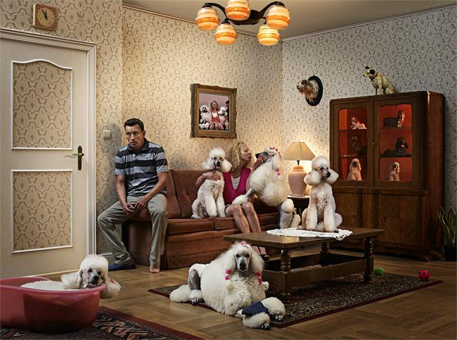 Hombre sentado en el borde de un sillón en medio de un living antiguo rodeado de perros poodle grande y su mujer besándo uno de ellos