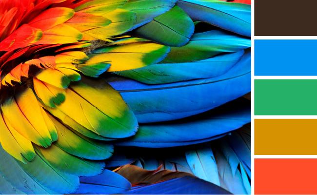 Aplica la Psicología del Color