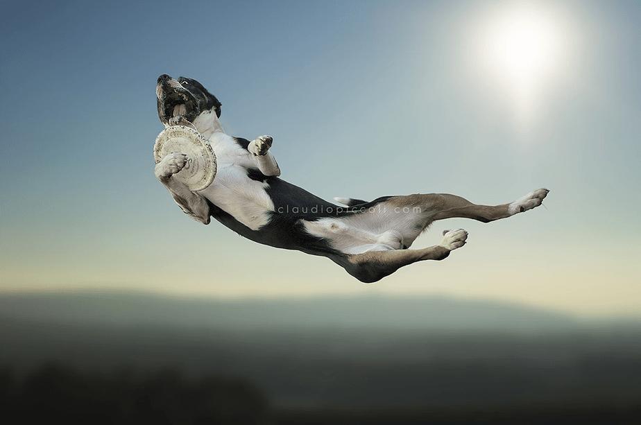 Fotografía de Mascotas Wix por Claudio Piccoli