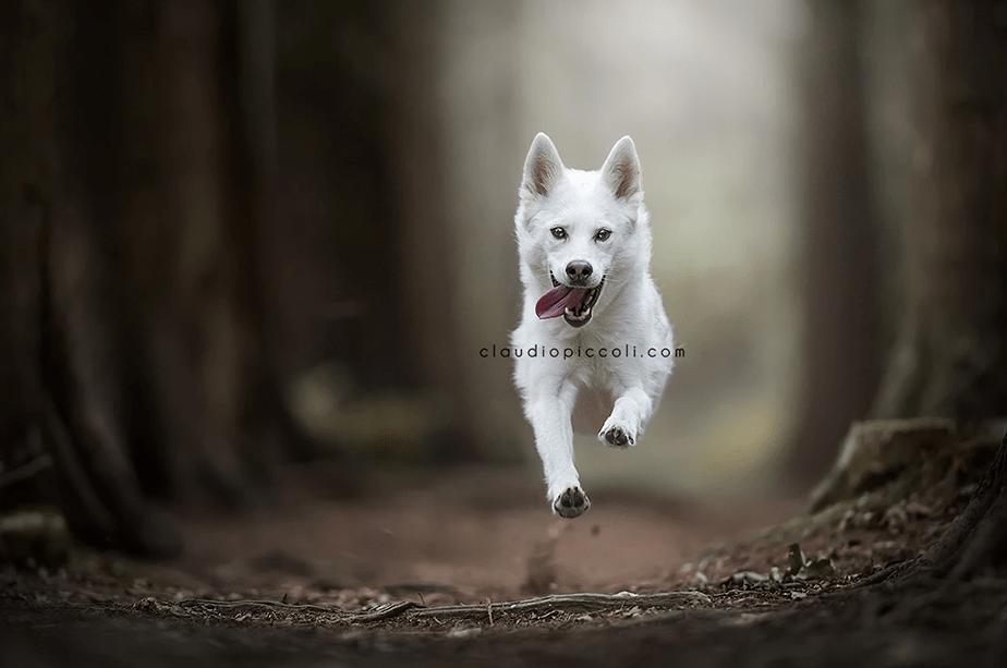 Fotografía de Mascotas Wix por Claudio Piccoli 2