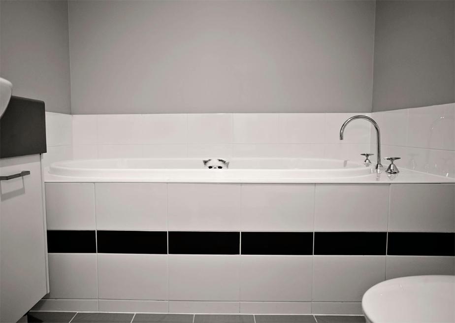 Fotografía de Mascotas Wix por Crea8ive Photography - 2