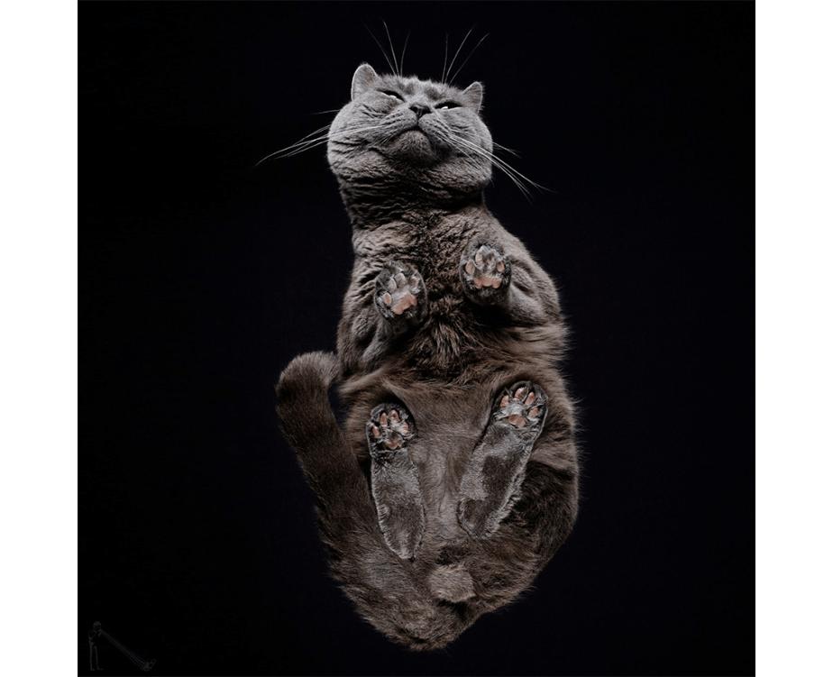 Fotografía de Mascotas Wix por Underlook