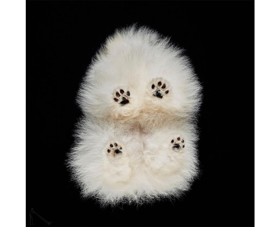Fotografía de Mascotas Wix por Underlook-2