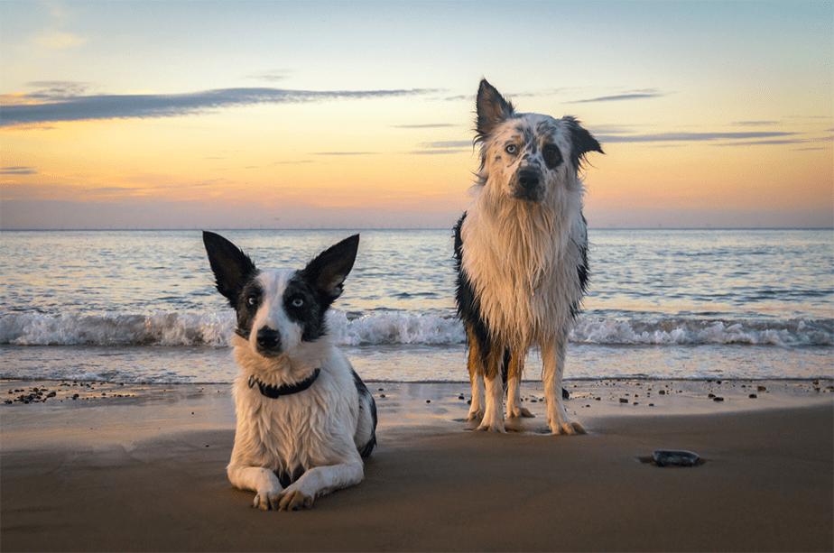 Fotografía de Mascotas Wix por Brad Damms Photography 2