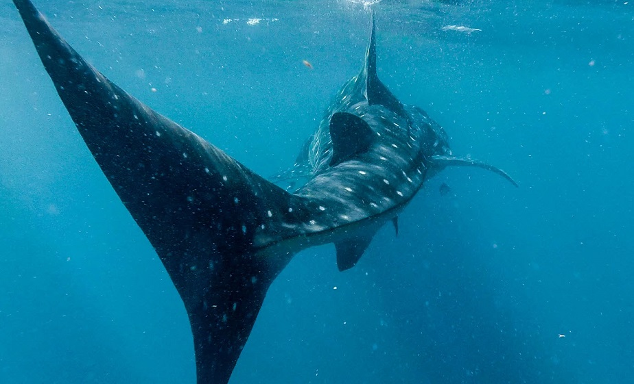 Cola de tiburón tomada po el fotógrafo Wix Dalton Gaudin-1